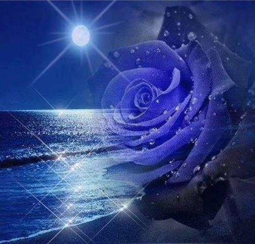 Rosa blu notturna delicato soffio di vento il mio for Foto di rose bellissime