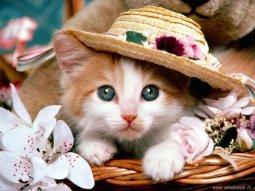 micetto con cappellino