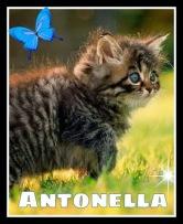 Gattino con farfalla e Antonella